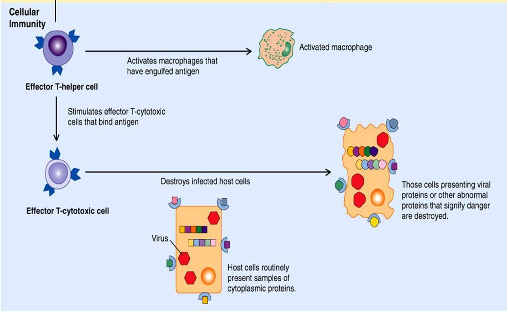 devoir agents antimicrobiens